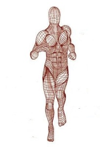 Fascia, the connective tissue of the muscular system
