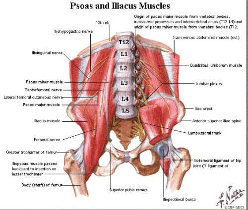 metaphysical cause of back pain | ravenstarshealingroom's blog, Human Body