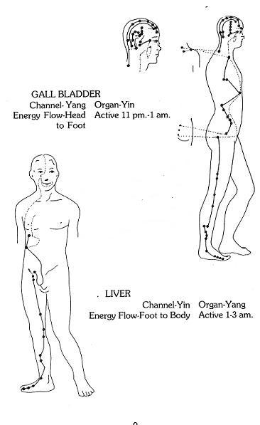 Gallbladder and Liver Meridians