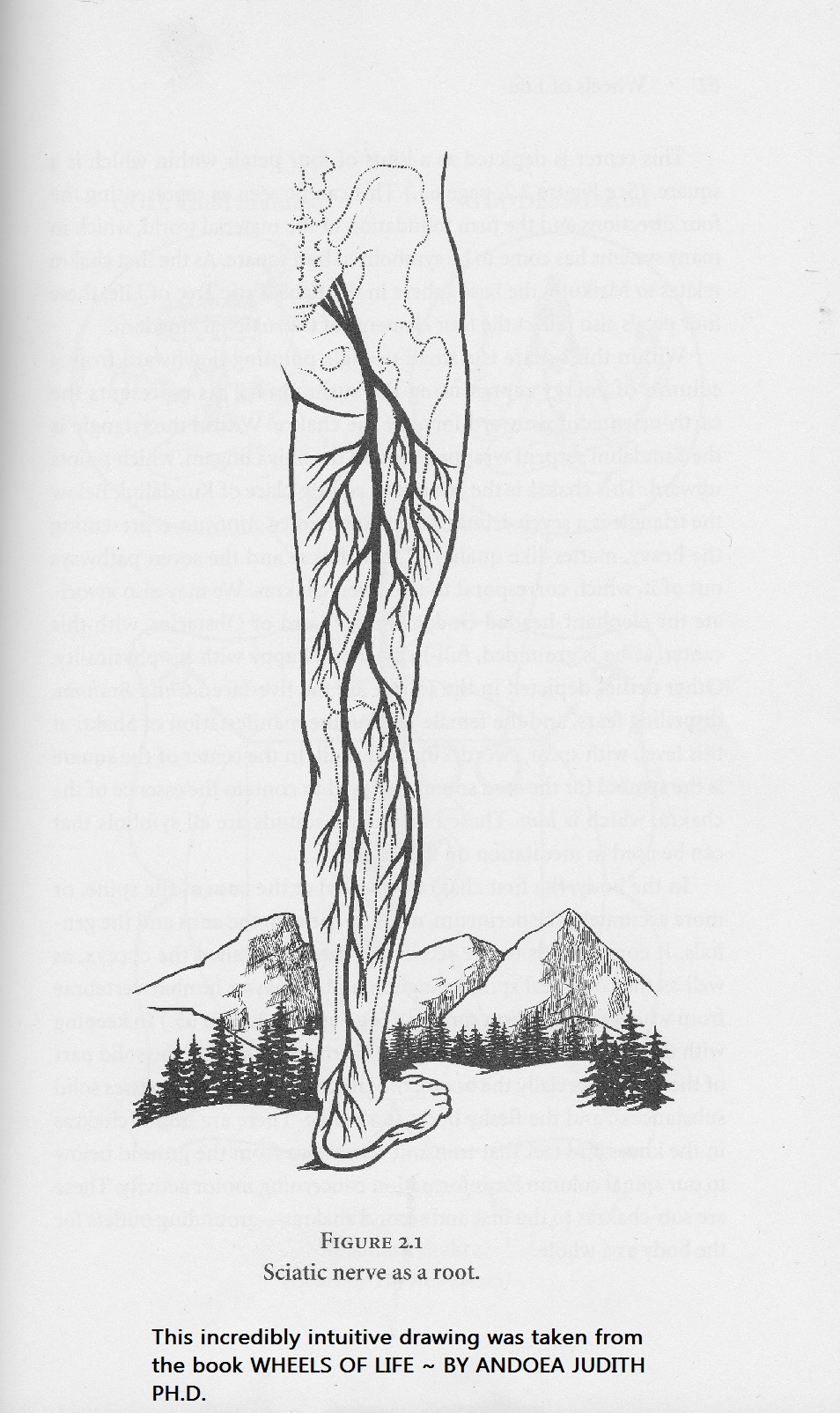 root chakra sciatica nerve