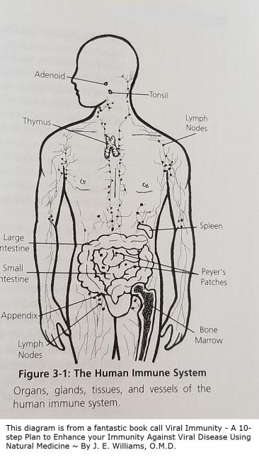 Immune system book
